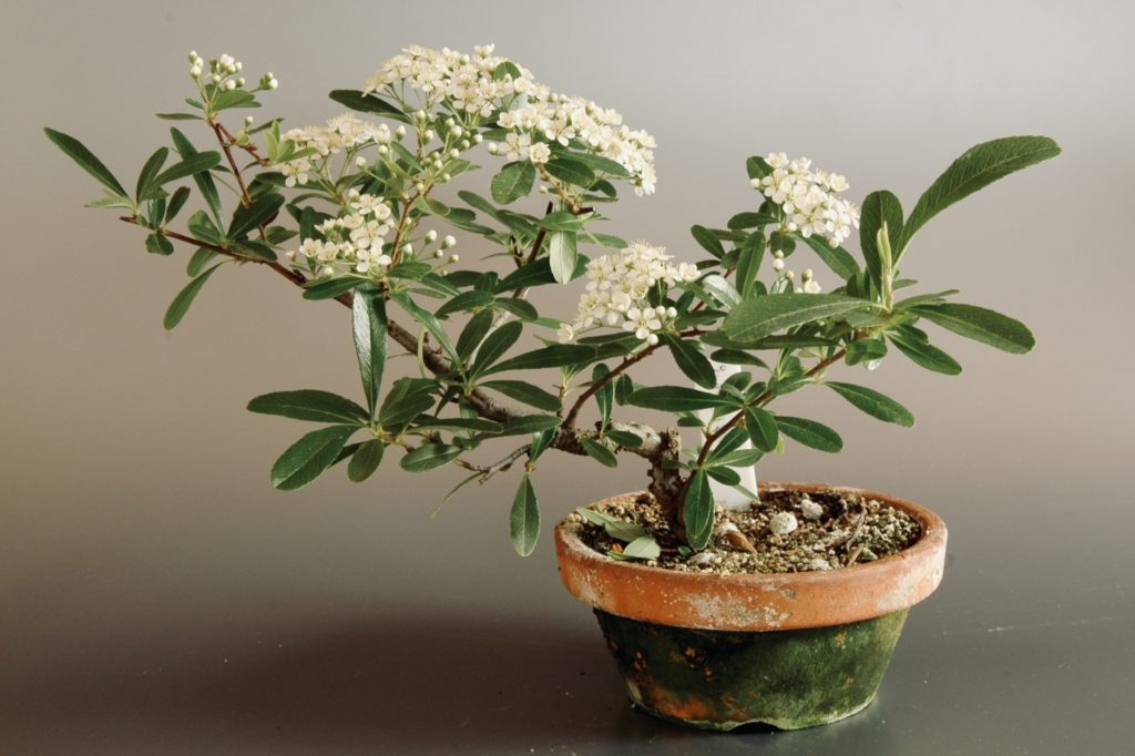 和風の植木鉢