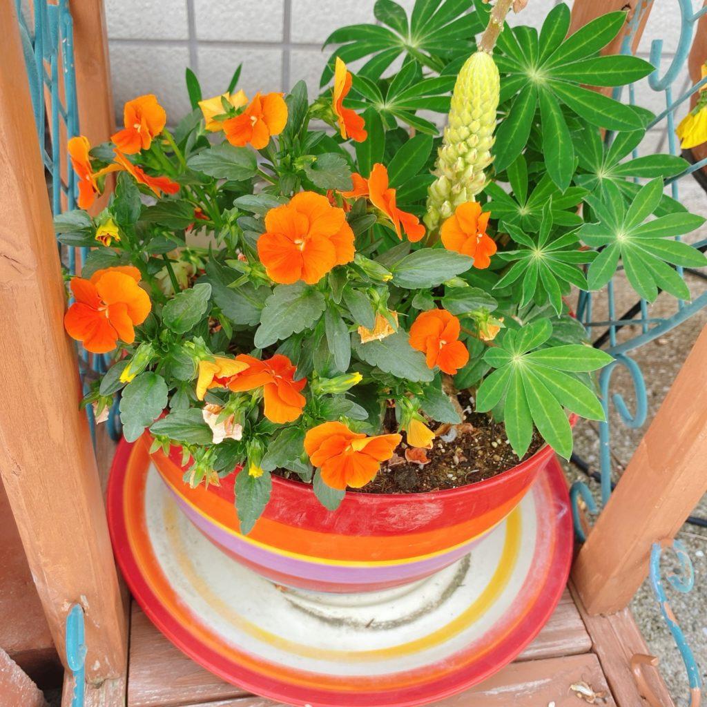 カラフルな植木鉢